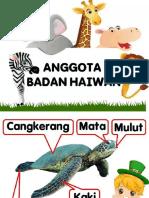 Anggota Badan Haiwan