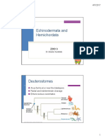 Z3-Echinodermatarev.pdf