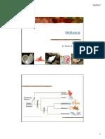 Z3-Mollusca.pdf