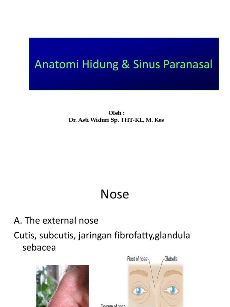 Anatomi Hidung Sinus Paranasal 2015 Facial Features Human Head