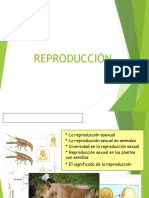 Tema 4. Funciones de Reproducción