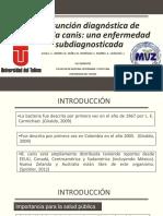 CPC-DE-PEQUEÑOS-ANIMALES (1).pptx