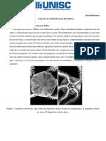 Lista de espécies brasileiras do filo Echinodermata- Gian Rodrigues.pdf