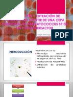 Exposicion III Fase Completo (1)