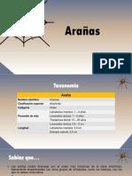 Taxonomia de Arañas