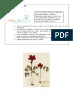 herbier.pdf