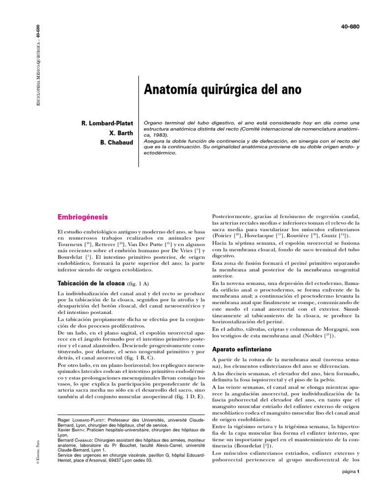 Anatomia Qx Del Ano