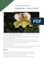 Orquídeas Paphiopedilum