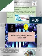 Funciones de Los Genes Eucariotas (Biologia Molecular)