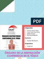 exposicion-de-anatomia-MAÑANA.pptx