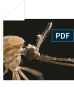 Molecular Approaches to Alter Olfactory Driven Behaviors of Insect Vectors