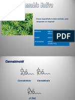 Cannabinoidi Due (1)