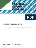 Diferencia Entre La Célula Eucariota y Procariota