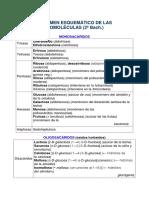 Resumen Esquemático de Las Biomoléculas