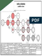 Steller evolution - leaf let.pdf