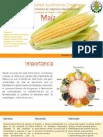 Presentacion maiz.pptx