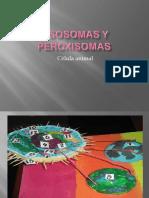 Lisosomas y Peroxisomas302