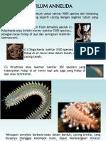 1-Annelida
