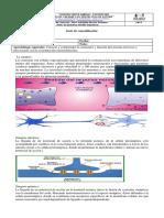 Guia Sinapsis y Receptores