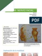 Vii Par- Nervio Facial