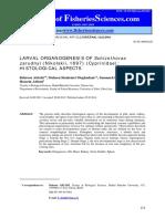 Larval Organogenesis of Schizothorax Zarudnyi Nikolskii 1897 Cyprinidae Histological Aspects