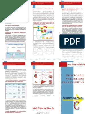 Que es carnitina pdf