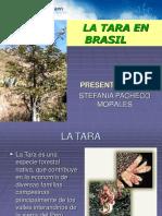 LA TARA EN      BRASIL.ppt