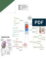 Anatomia Celular.png
