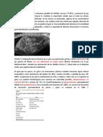 Ulceras gastrointestinales en pequeños animales