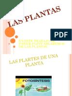 PAWER POINT PLANTAS.pptx