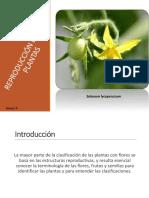 Reproducción de Las Plantas (a. Órganos Reproductores)