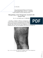 Histopathology of the telangiectasia associated with varicose veins
