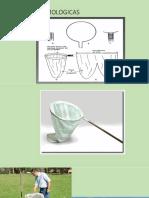 2.1.1. Cabeza Apéndices y estructura.pdf