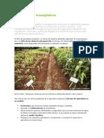 Agricultura y transgénicos.docx