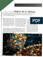 Base neurológica de la dislexia (1).pdf