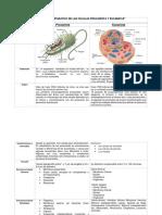 Cuadro Comparativo de Las Células Procariota y Eucariota