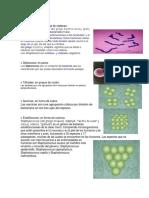 Clsificacion de Las Bacterias (microbiologia)