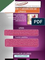 Digestión y Absorción de Lípidos Zurita (1)