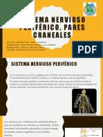 Sistema Nervioso Periférico Pares Craneales