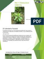 Calendario y Fenología Forestal