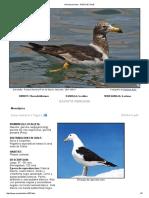 Gaviota peruana - AVES DE CHILE.pdf