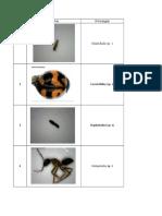 Foto Serangga
