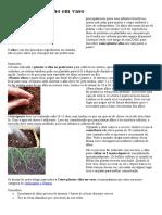 Como plantar alho em vaso.doc