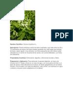 25 plantas curativas