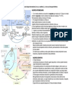 TOXOPLASMOSIS - Ciclo Evolutivo