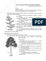 plantas Aneurophyta