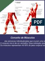Anatomia e Fisiologia Humana Aula 2