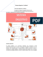Sistema Digestivo Y Linfático