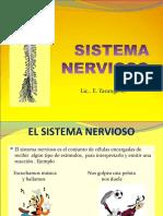 sistemanervioso6toautoguardadofinal2013-130310112654-phpapp01.pdf
