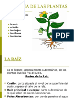 Anatomia de Las Plantas